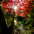 Sunshine coming through brightly coloured Autumn trees and the rays of light falling onto a burn that is running below