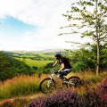 Mountain Biker in the hills above Innerleithen, Scottish Borders with heather in the foreground.