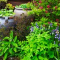 image of planters in garden of Cosaig self catering holiday house Innerleithen Scottish Borders