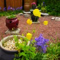 Image of raised area with pots bluebells and welsh poppies in garden of Cosaig self catering holiday house, Innerleithen, Scottish Borders